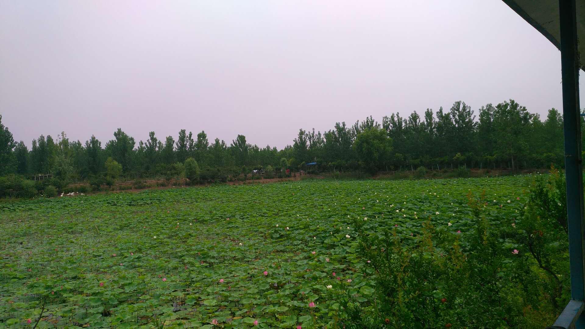 苗圃基地实景